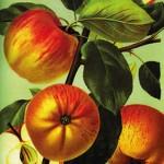 Postkarte Hofcafé Apfelfest 2007