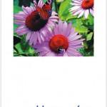 Postkarte Hofcafé Sommerfreunde