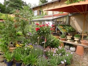 Blumen und Pflanzen bei den Gärtner bei Mutter Fourage